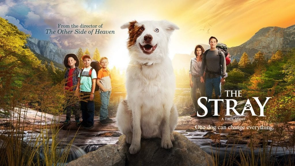 THE STRAY Family Movie Review