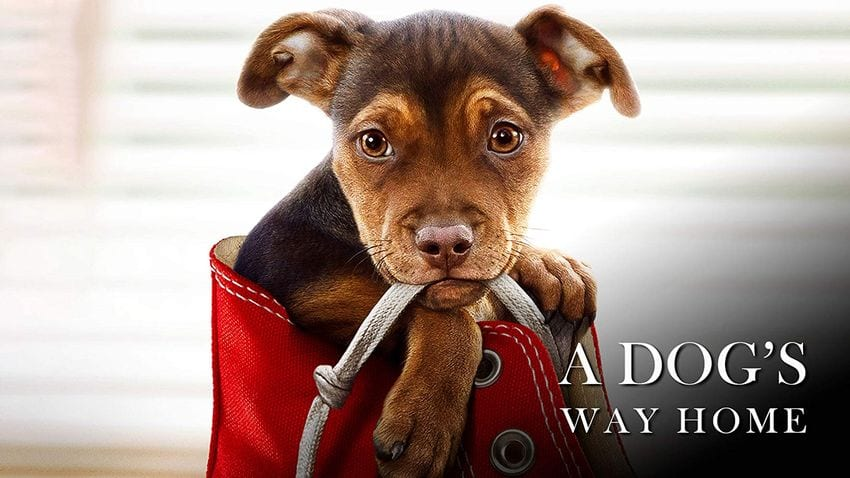 Family Review: A DOG'S WAY HOME is Heartwarming, Lovely