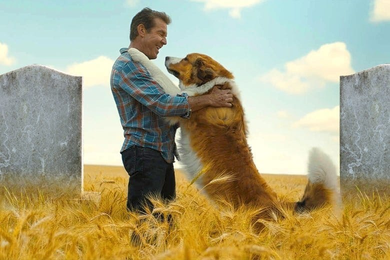 Family Review: A DOG'S JOURNEY Will Hit Canine Lovers in the Feels